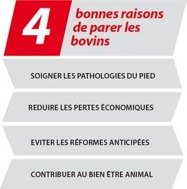 4 bonnes raisons de parer les bovins
