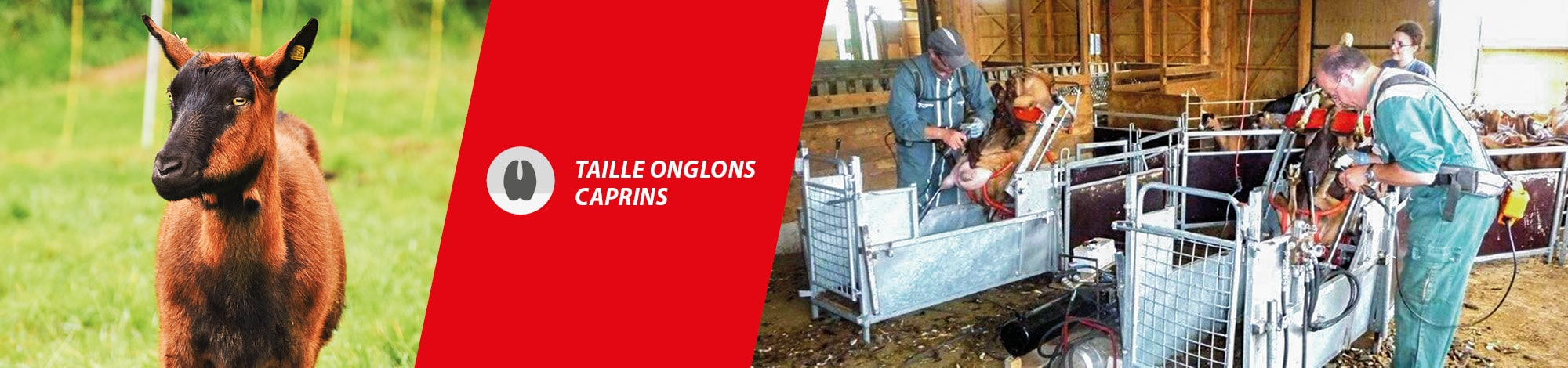 Slide - Taille onglons caprins